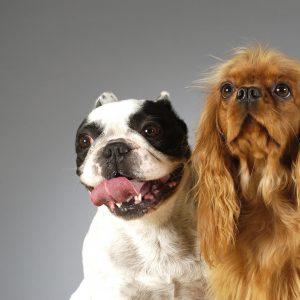Nestle Purina Pet Care